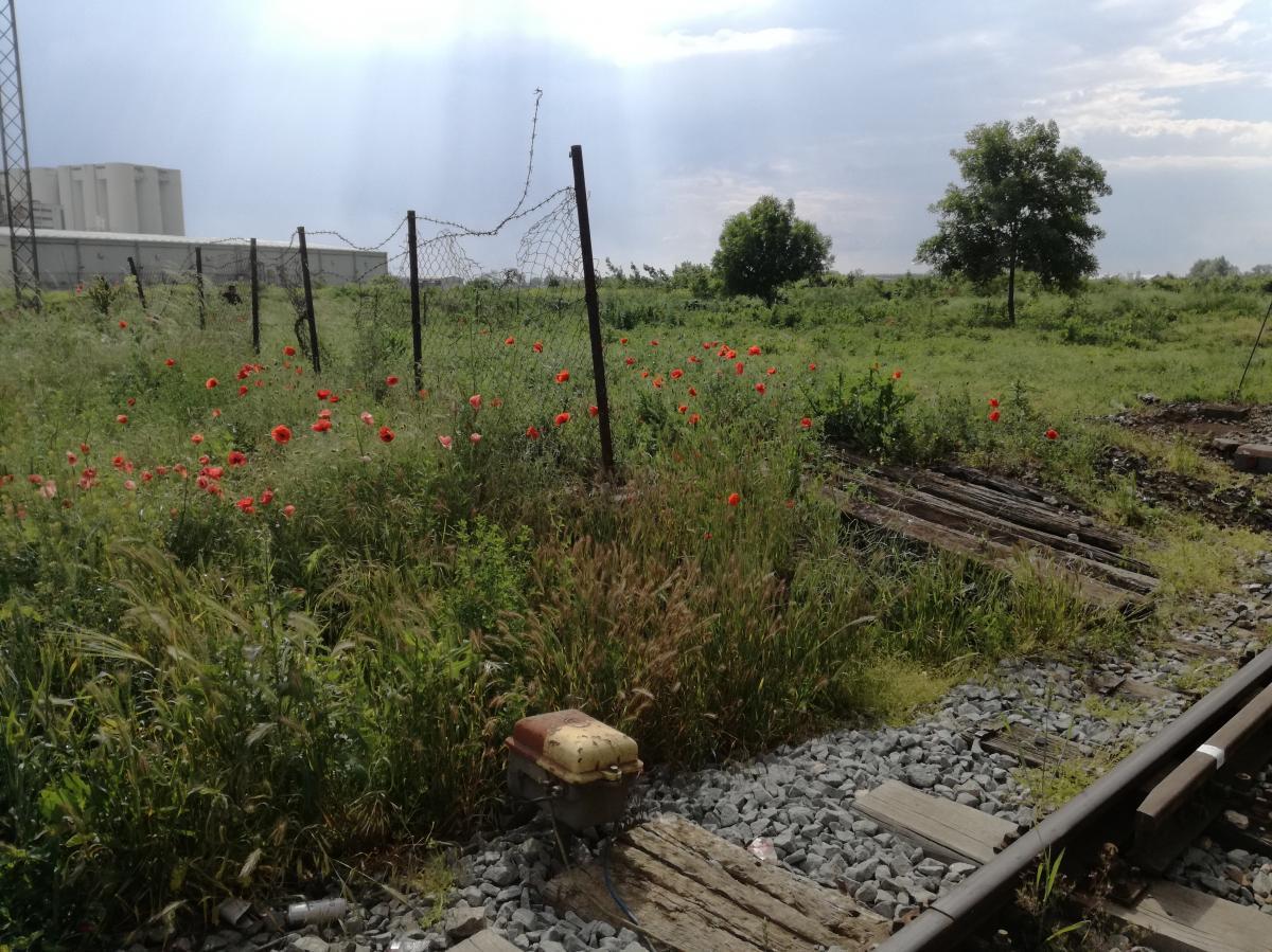 Landscape Šid Serbia