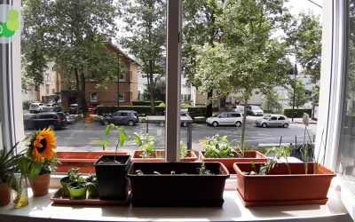 The DIY Balcony Garden